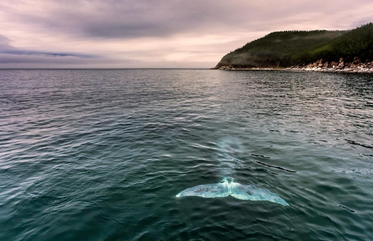 Красоты России. Шантарские острова и киты