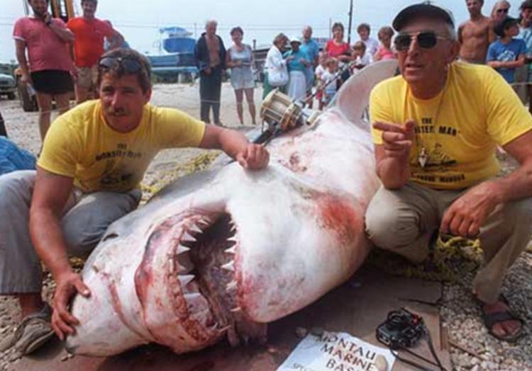 Самые большие пойманные в истории акулы