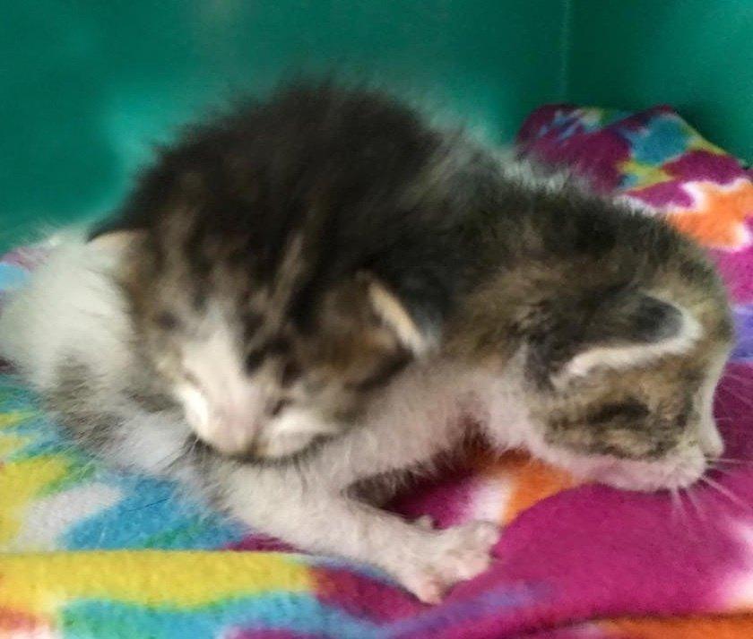 «Их уже положили на стол!» 11-летняя девочка спасла жизнь новорожденным котятам)