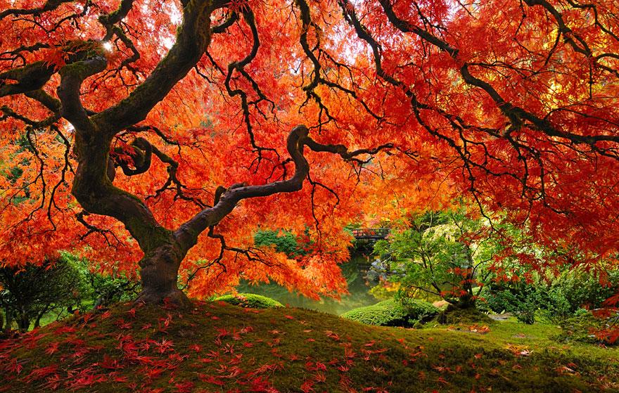 Потрясающе красивая подборка фотографий осени