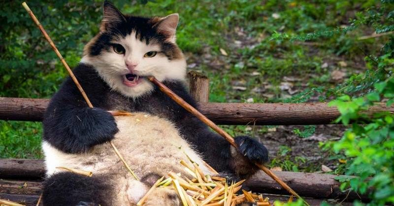 Кот-моль, кот-панда и другие персонажи из странного инстаграма одной кошатницы