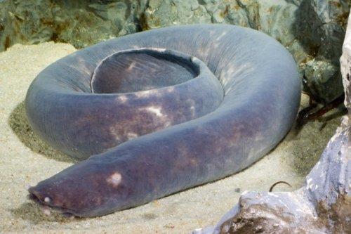 Топ-10: Водные животные с уд…
