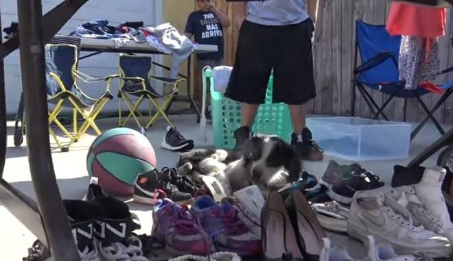 Собака взглянула на подошедших волонтеров и вдруг потеряла сознание