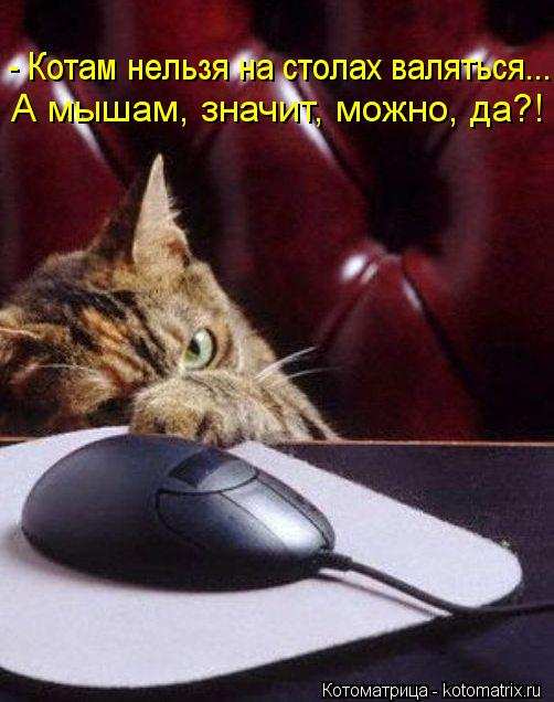 Котоматрица: - Котам нельзя на столах валяться... А мышам, значит, можно, да?!