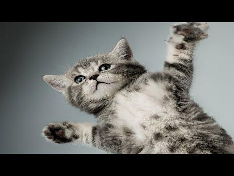 Приколы про животных новый выпуск 27 05 2017 русские приколы с животными домашние животные