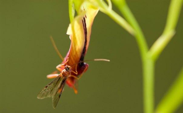 Удивительная орхидея