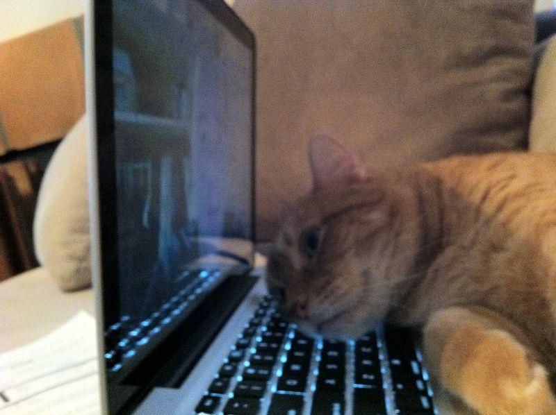CatsGoldenHearts24 Почему мы любим кошек