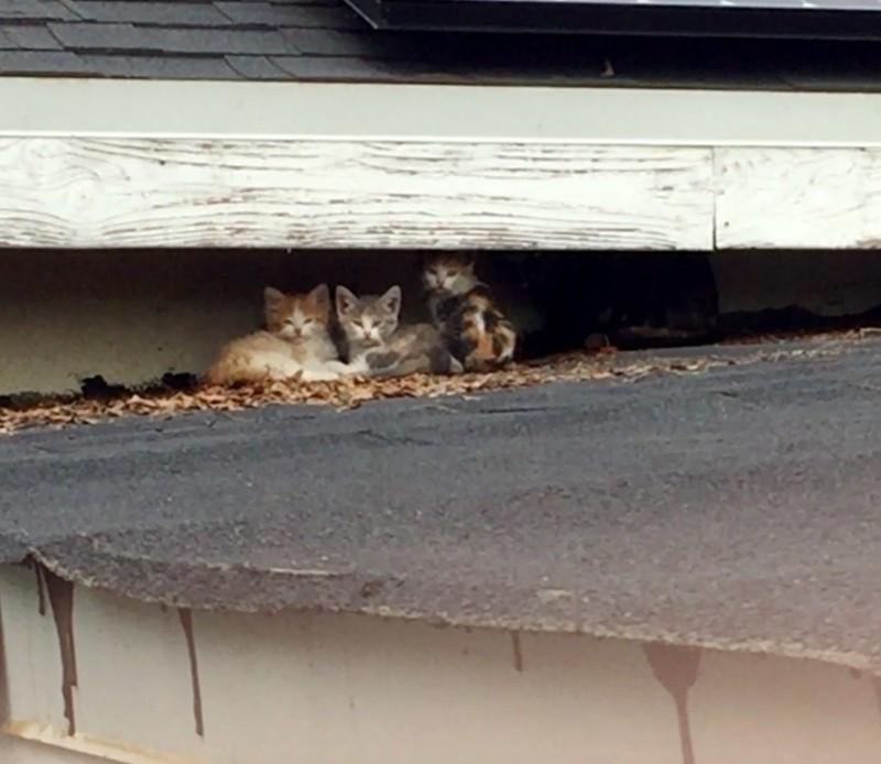 В Лос-Анджелесе с крыши спасли большую семью кошек