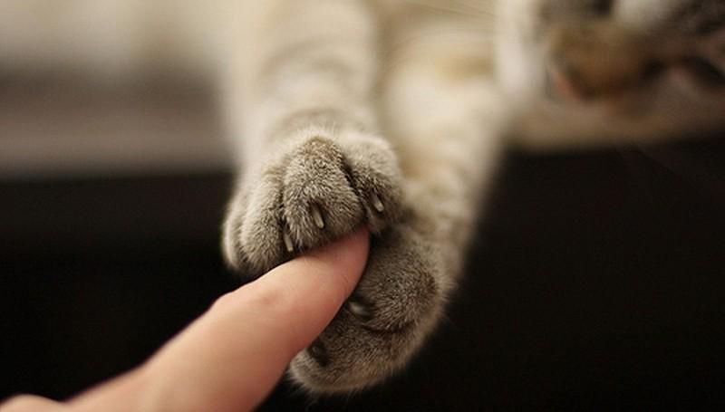 И всегда пожмет вам руку.