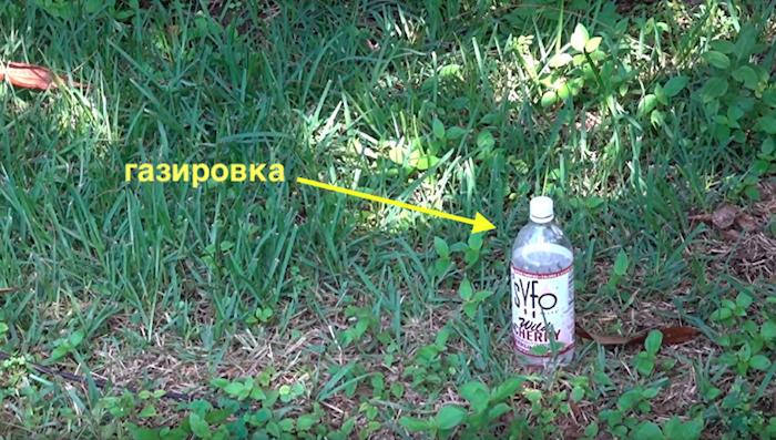 Простая ловушка, с помощью которой фермеру удалось уничтожить несколько тысяч комаров за сутки