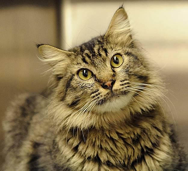 Профессор Асланян: «Кошки знают нас лучше, чем мы их»