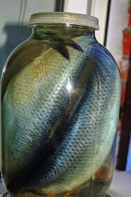 Солим рыбку дома