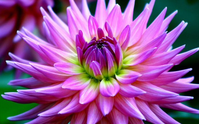 цветы осени 8 (700x437, 361Kb)