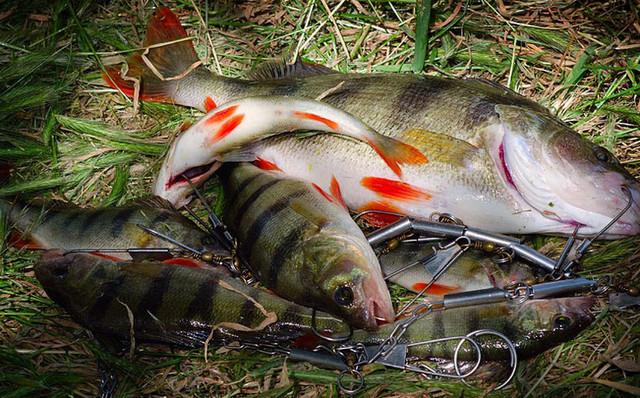 копчение карася сверху рыбалке