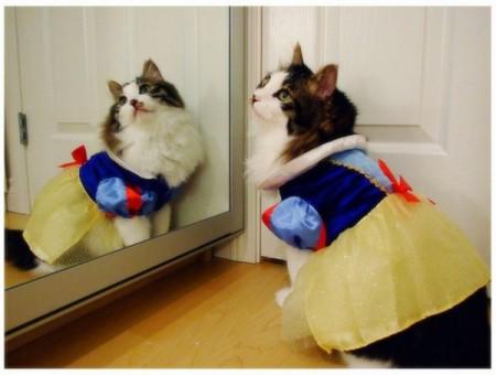Ну як - я красива?? - зеркало, кошка/3518263_417020 (450x340, 32Kb)