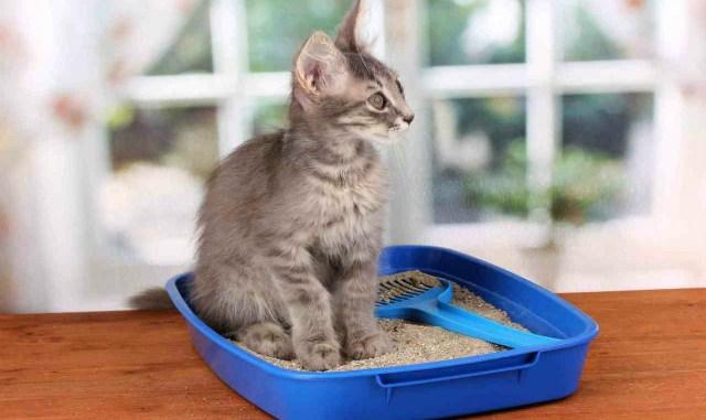 В доме не пахнет котами, и вот как этого добиться