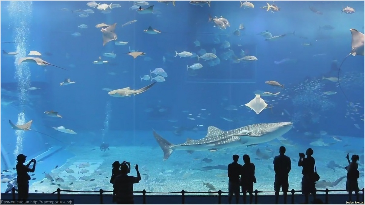 Okinawa Churaumi Aquarium tourism destinations