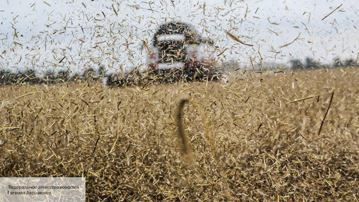 Эксперт высоко оценил перспективы сотрудничества России и Африки по экспорту зерна