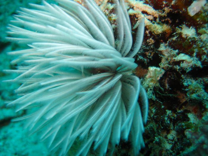 Жители морских глубин - морские лилии