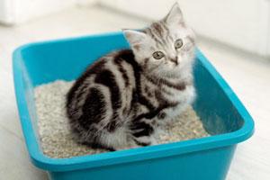 Как приучить кошку к туалету
