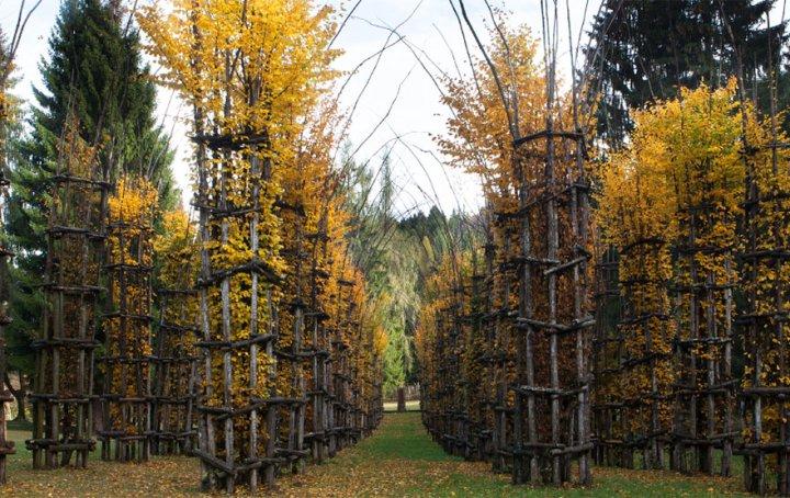собор из деревьев джулиано маури (5)