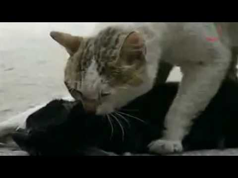кошачья скорбь
