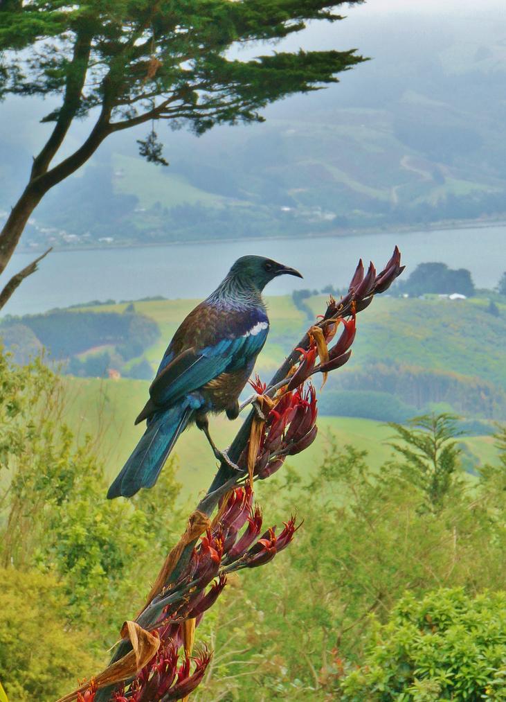 Сады замка Ларнах, Новая Зеландия - фотопрогулка