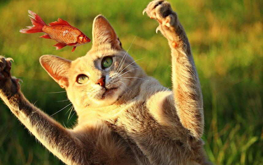 Кот, в отчаянии пытающийся достать рыбу из-под льда, прославился в Сети