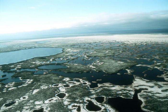 Это Западная Сибирь — Большие Васюганские болота.