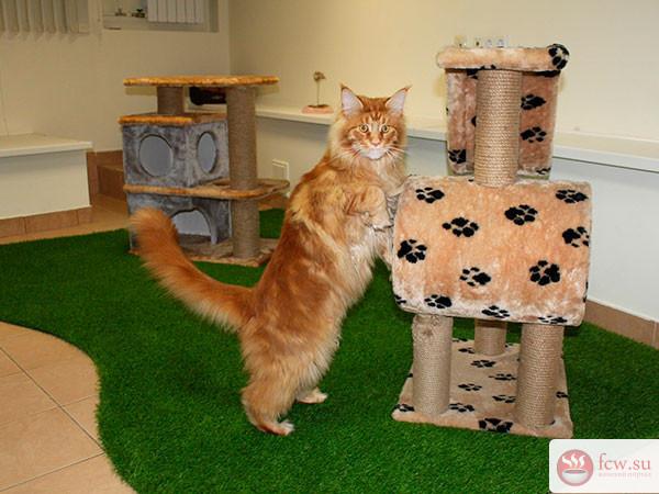 Что делать с котом, если хоз…