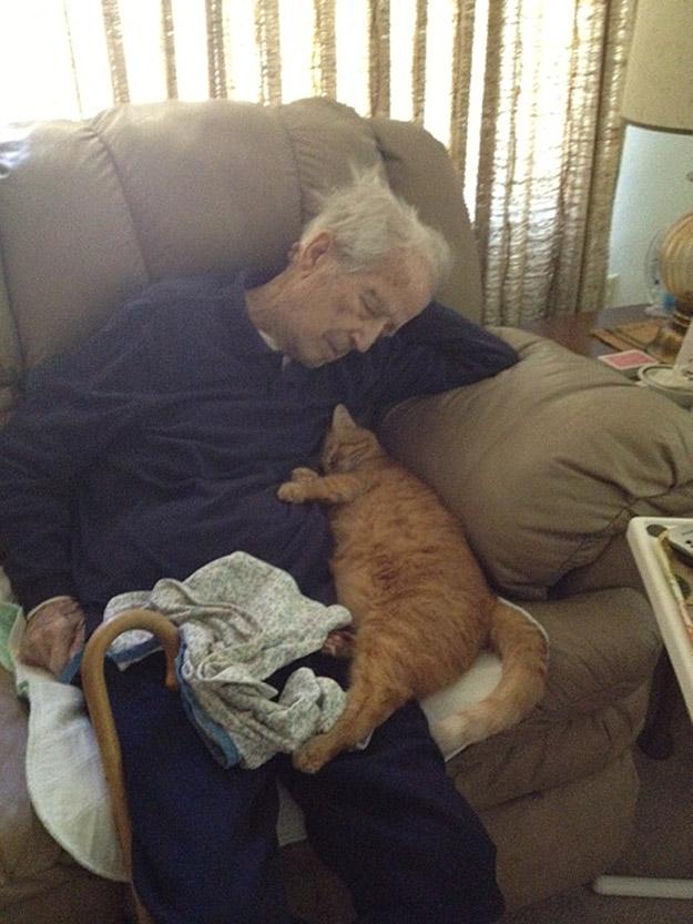 CatsGoldenHearts10 Почему мы любим кошек