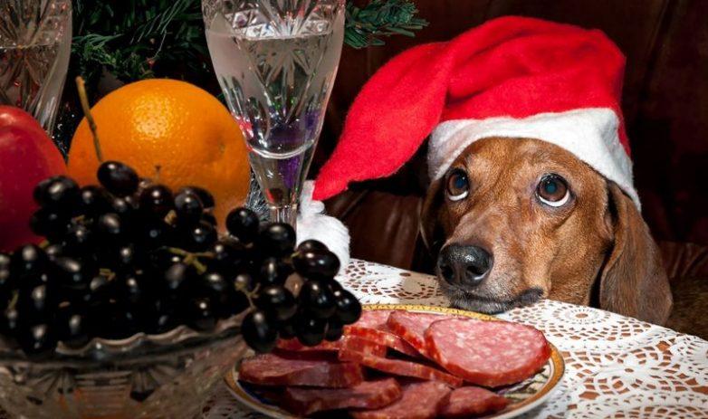 Как пережить новогоднее застолье?