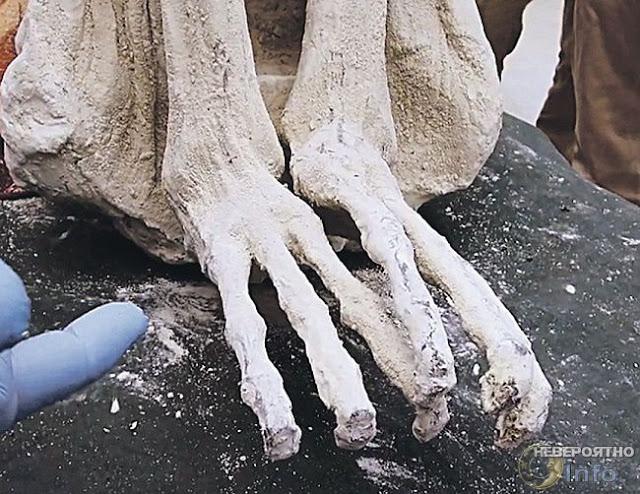Тайна трехпалых мумий