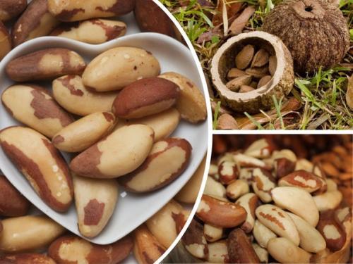 Плоды бразильского ореха — самый богатый продукт по содержанию селена: порядка 2 мг селена в 100 г продукта.