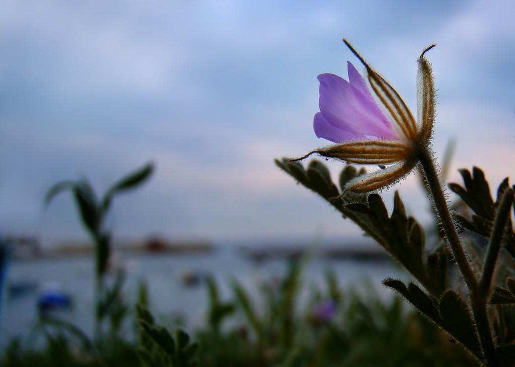 А хорошо у моря жить, в рассветы чаек провожая...
