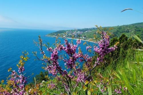 Крым на майские праздники по…