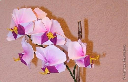 Как сделать цветок из орхидею бумаги