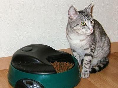 Хай-тек для котов: вот такая котоВасия!