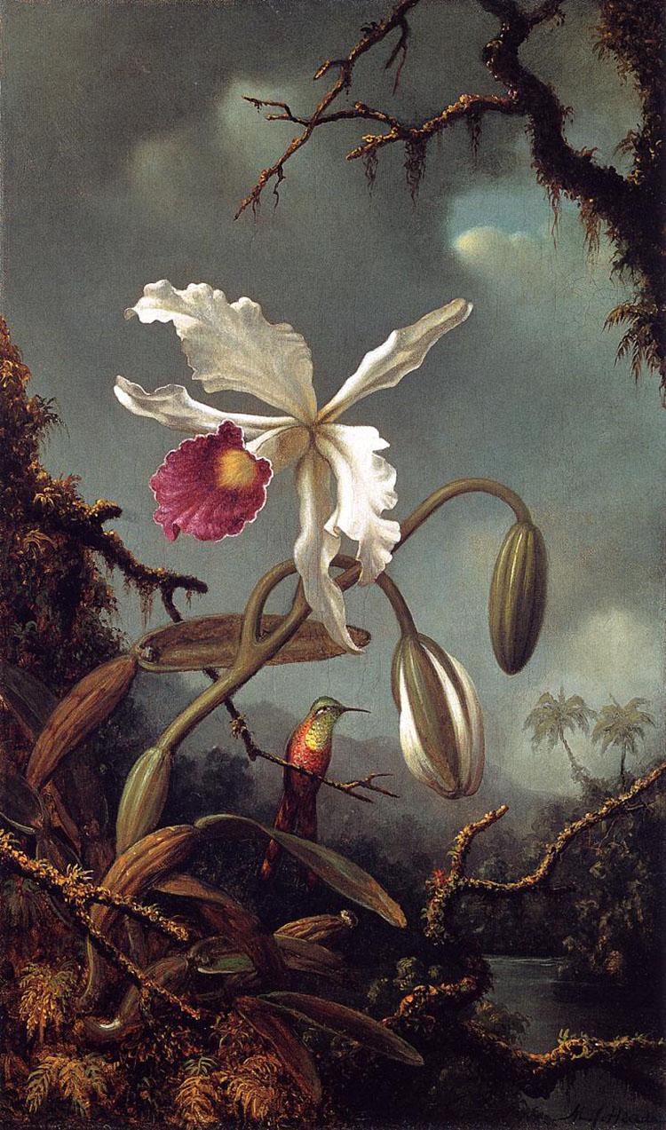 """""""И цветы цветут красоты неописанной"""" - великолепные орхидеи и колибри Мартина Джонсона Хеда"""