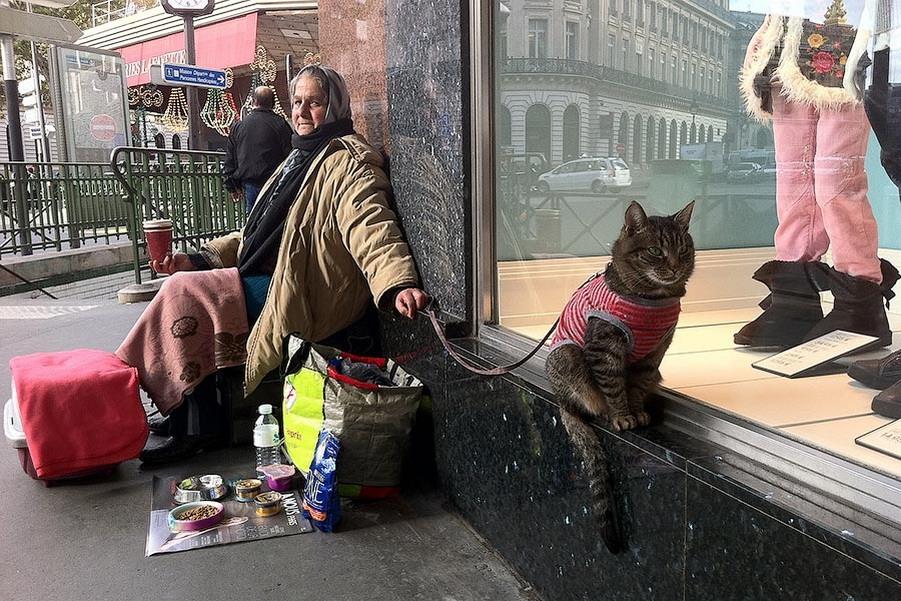 Великие о кошках...