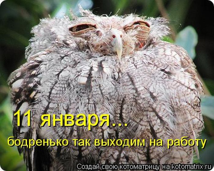 КОТОМАТРИЦА старо-новогодняя