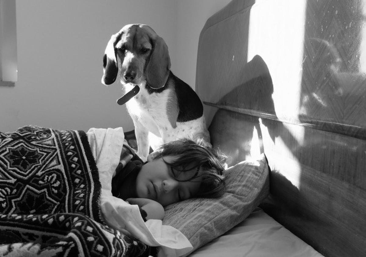Опасная собачья болезнь угрожает хозяевам