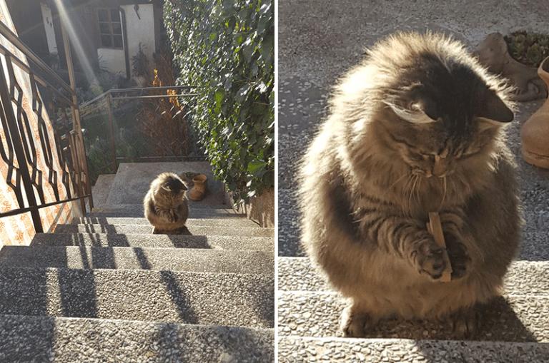 13 Фото животных, которые поднимут вам настроение