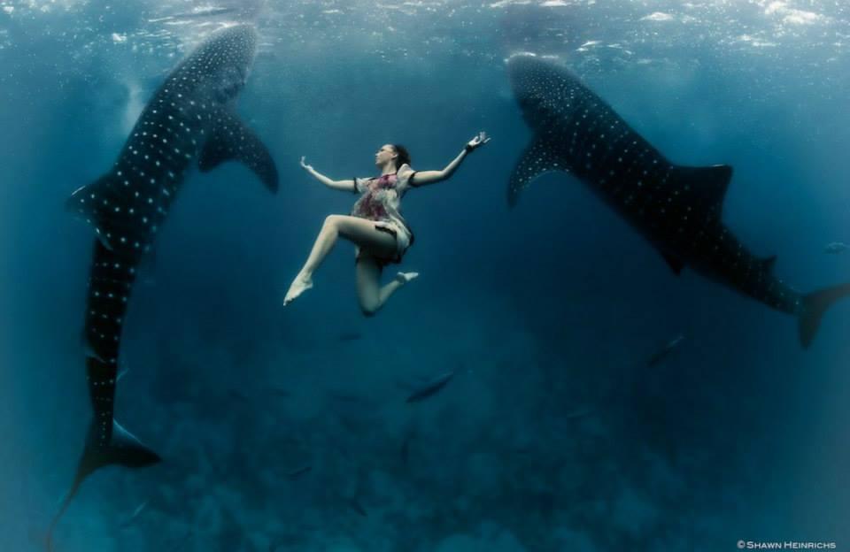 Настоящая русалка или танцы с акулами