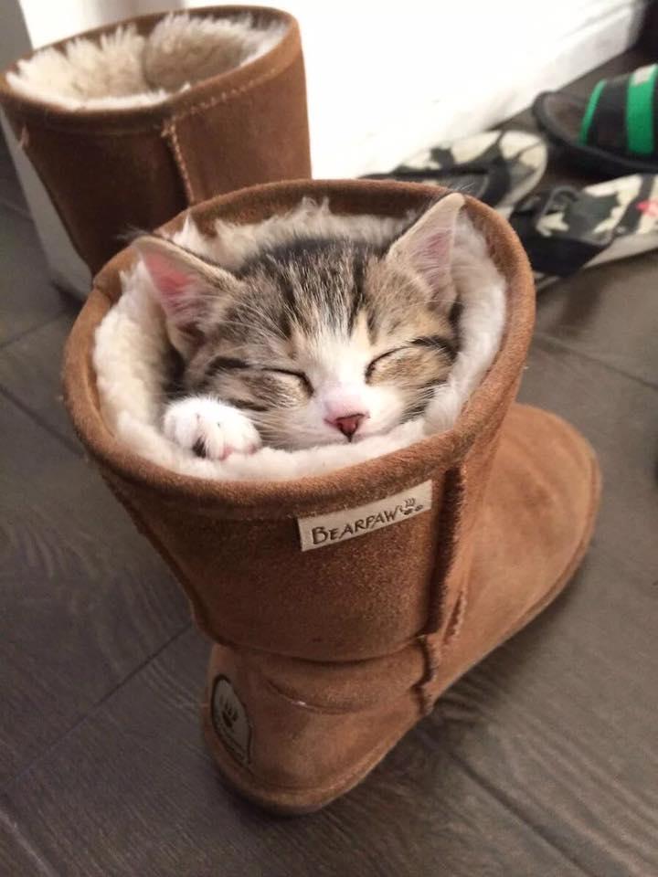 Кот написал в женский сапог. Теперь у нас с котом есть свои женские сапоги, 39-го размера...