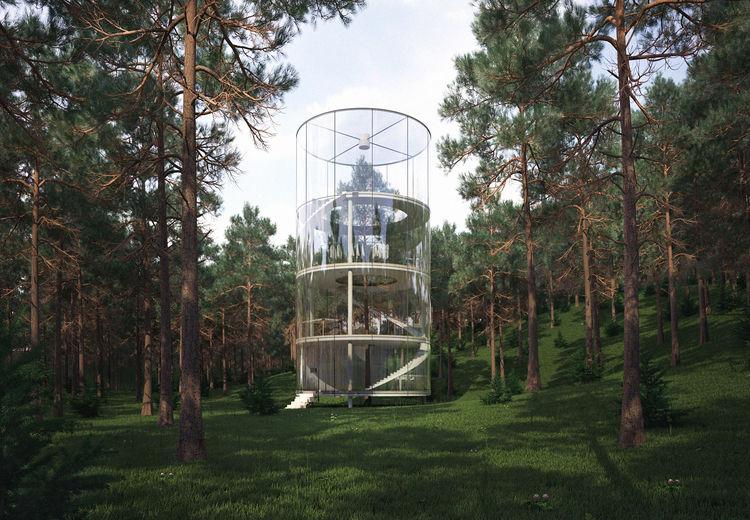 Дерево в доме — новое концептуальное место для духовного уединения