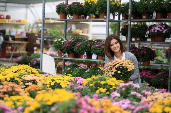 Хризантема мультифлора - популярная цветочная новинка