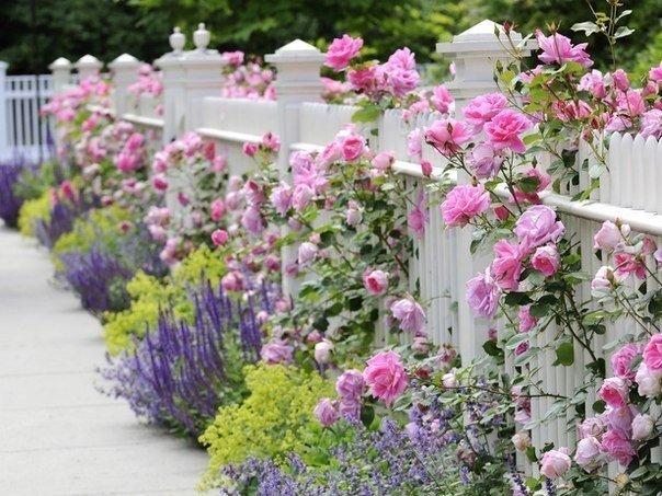 Очаровательный садик с розами