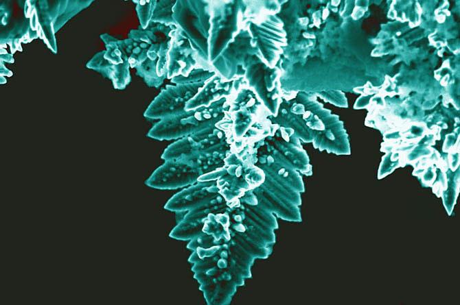 Нано-растения