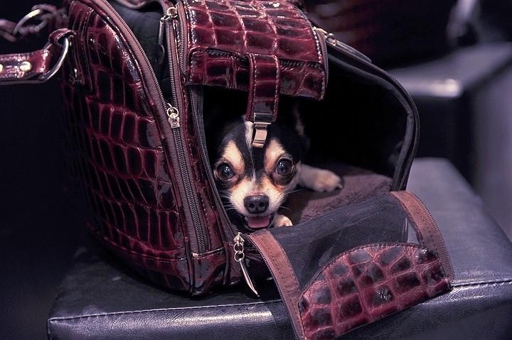 Лайнер из Петербурга на подлете к Москве совершил экстренную посадку из-за собаки, открывшей багажный отсек